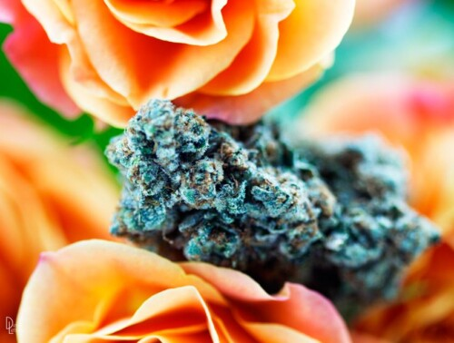 Tips for Taking Great Weed Photography 7