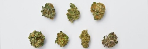 How to Microdose Cannabis 1
