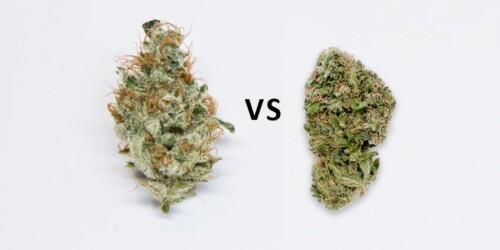 Why You Think All Weed Is The Same 1