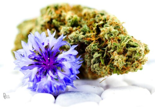 Tips for Taking Great Weed Photography 1