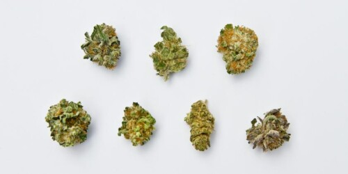 Why You Think All Weed Is The Same 4