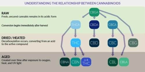 Cannabinoid 1