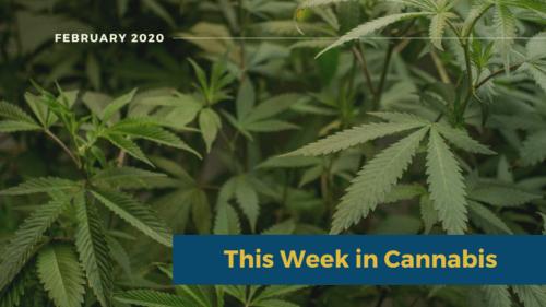 Cannabis News: This Week in Cannabis February 2020 Wrap Up 1