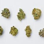 how to smoke weed choosing strains